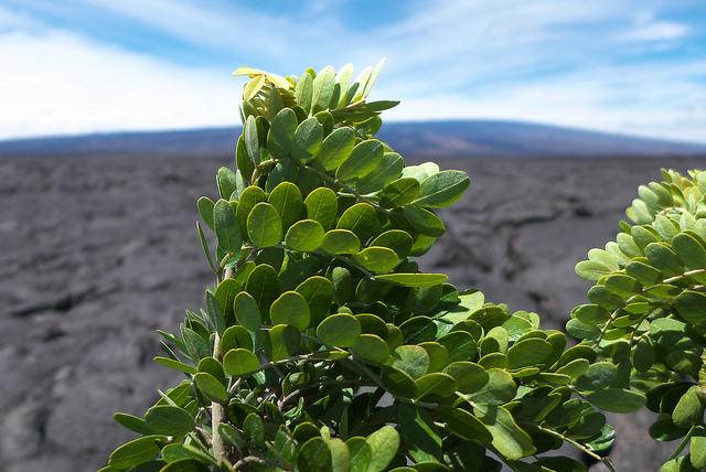 ハワイ火山国立公園の画像 p1_16