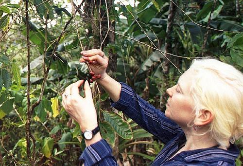キューバ南東部のコーヒー農園発祥地の景観
