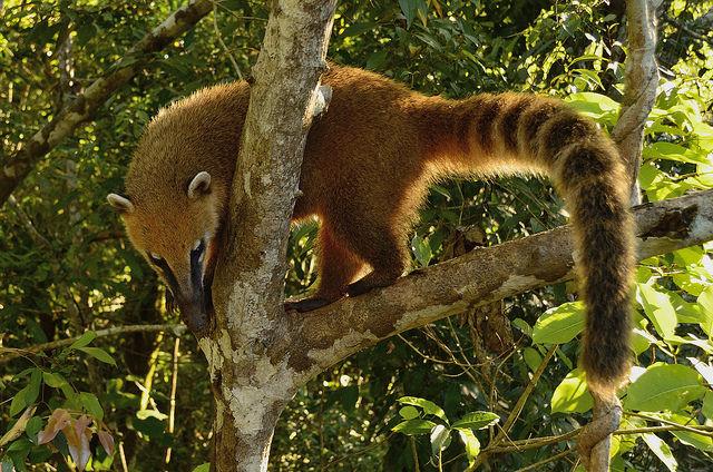 イグアス国立公園 (アルゼンチン)の画像 p1_26