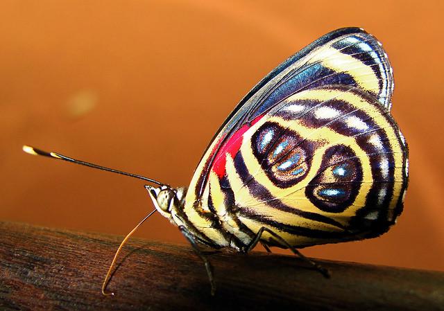 イグアス国立公園 (アルゼンチン)の画像 p1_24