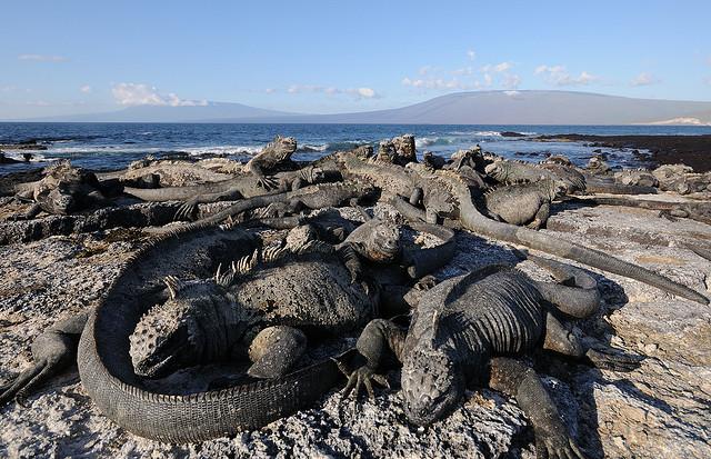 ガラパゴス諸島の画像 p1_24