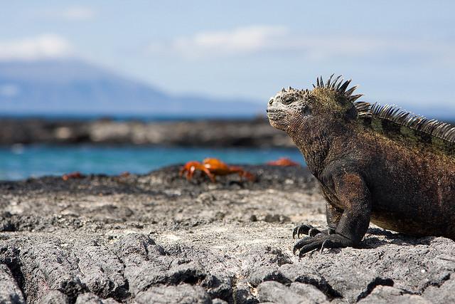 ガラパゴス諸島の画像 p1_26
