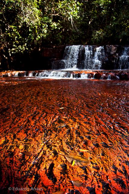 カナイマ国立公園の画像 p1_37