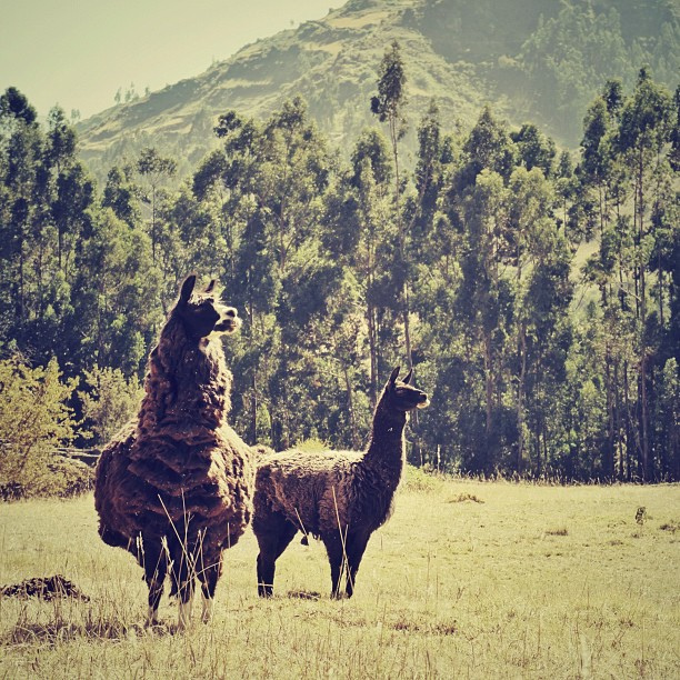 ワスカラン国立公園の画像 p1_3