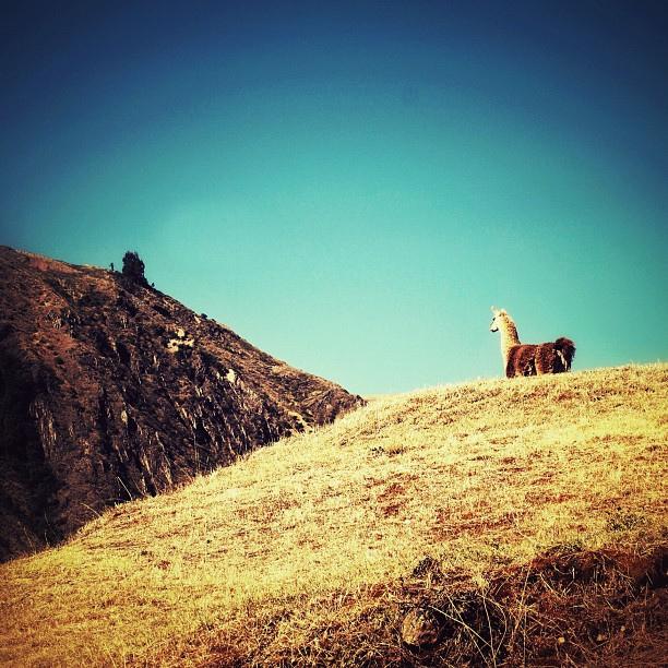 ワスカラン国立公園の画像 p1_19