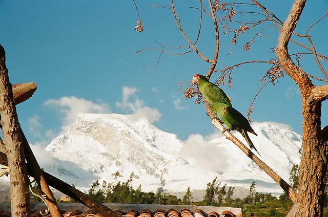 ワスカラン国立公園の画像 p1_26