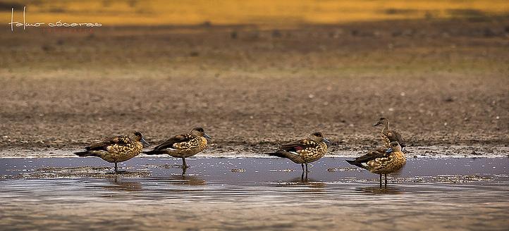 ワスカラン国立公園の画像 p1_34