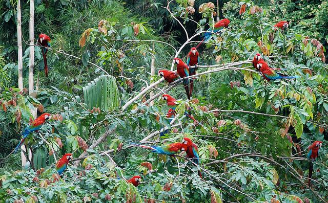 マヌー国立公園の画像 p1_17