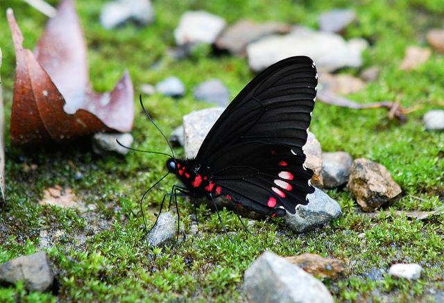 マヌー国立公園の画像 p1_2