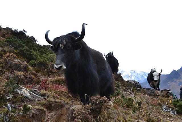 サガルマータ国立公園の画像 p1_31
